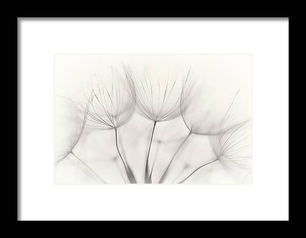 Downy Tuft Framed Print featuring the photograph No Title by Jakob Arnholtz
