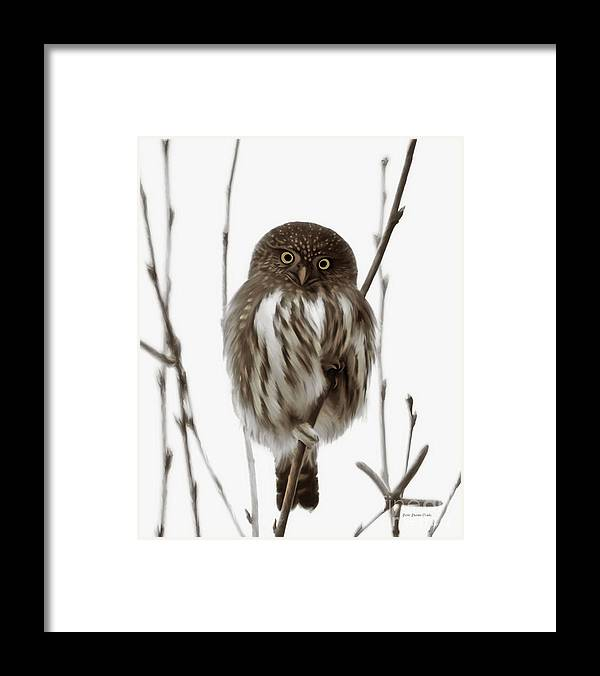 Northern Pygmy Owl Framed Print featuring the painting Northern Pygmy Owl - Little One by Beve Brown-Clark Photography