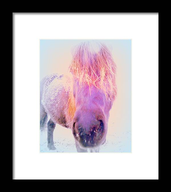 Horse Framed Print featuring the photograph I'm The Famous Winter Nosy Spirit But I Don't Care by Hilde Widerberg