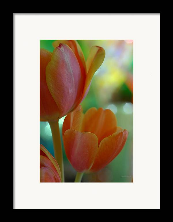 Tulips Framed Print featuring the photograph Nothing As Sweet As Your Tulips by Donna Blackhall
