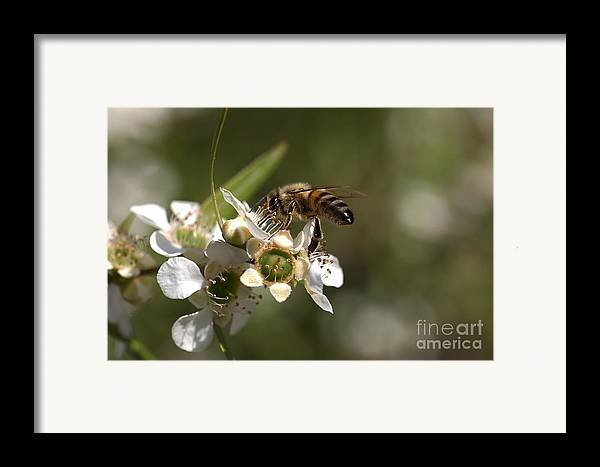 Joy Watson Framed Print featuring the photograph Nourishment by Joy Watson
