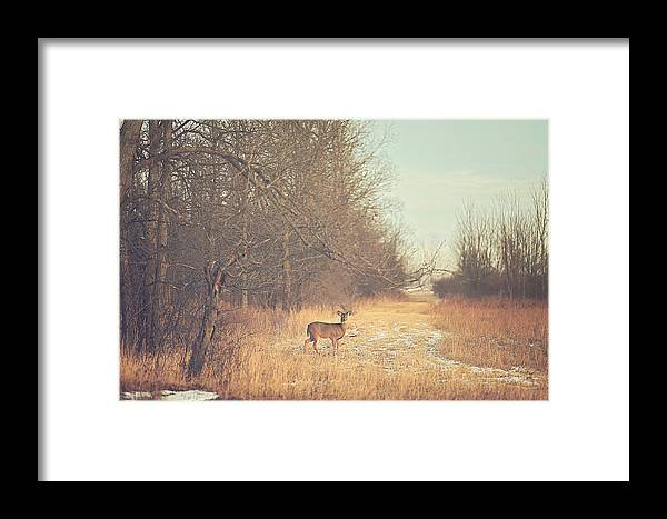 November Framed Print featuring the photograph November Deer by Carrie Ann Grippo-Pike
