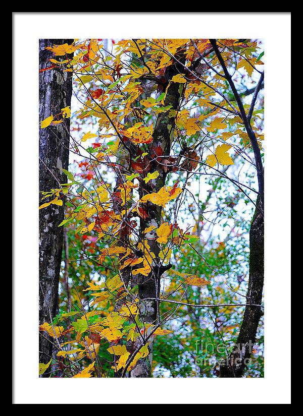 Fall Leaves Framed Print featuring the photograph November Leaves by Leon Hollins III