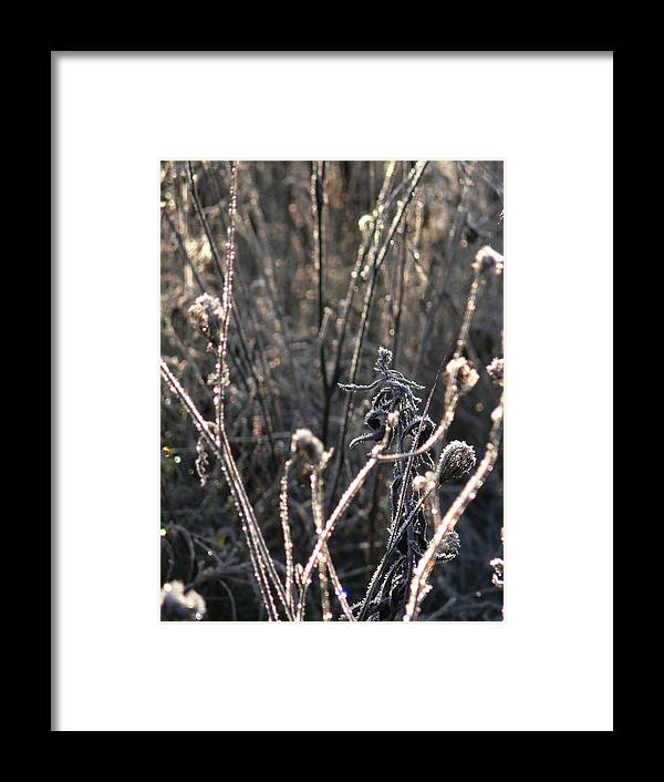 Frost Framed Print featuring the photograph Novembers Crystal Phase by Natalie LaRocque