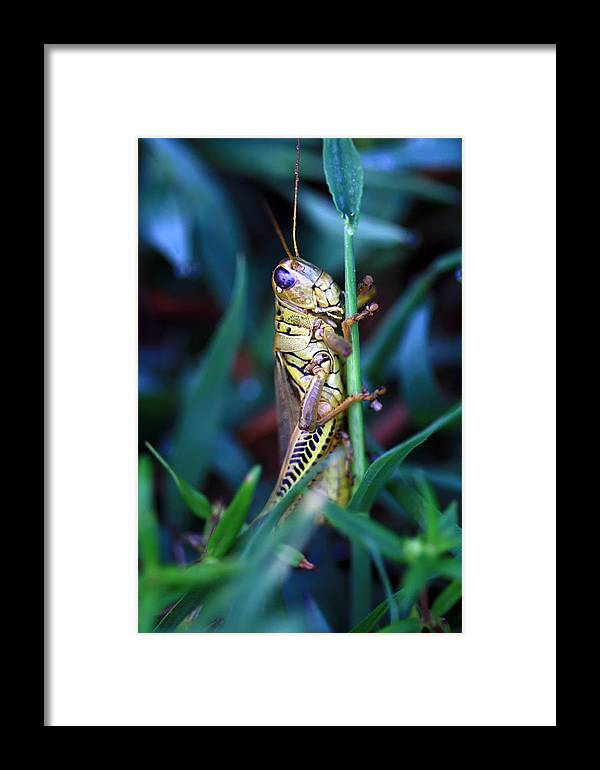 Grasshopper Framed Print featuring the photograph Now I Can See You Better by Carolyn Fletcher