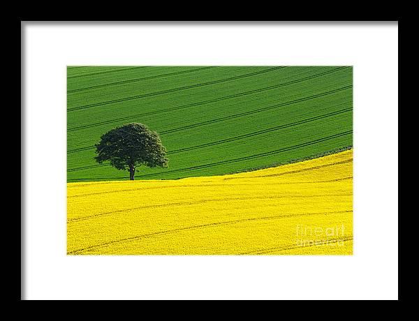 Rape Seed Framed Print featuring the photograph Oak tree split by Richard Thomas