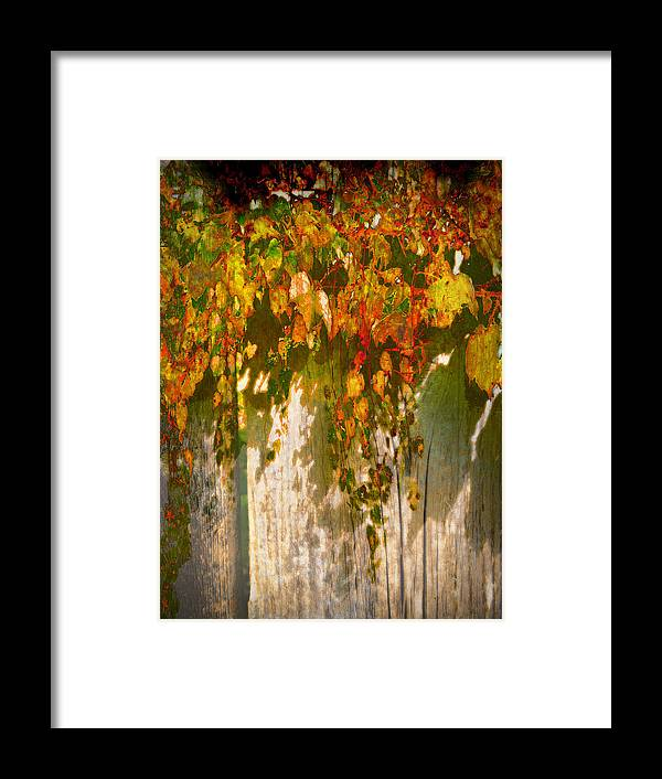 Fall Framed Print featuring the photograph October Colors by John Anderson