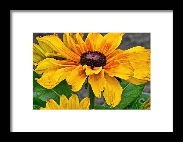 Floral Framed Print featuring the photograph Oh Summertime by Christine Belt