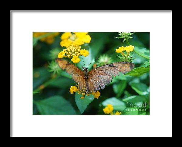 Nature Framed Print featuring the photograph Old Butterfly by Rudi Prott
