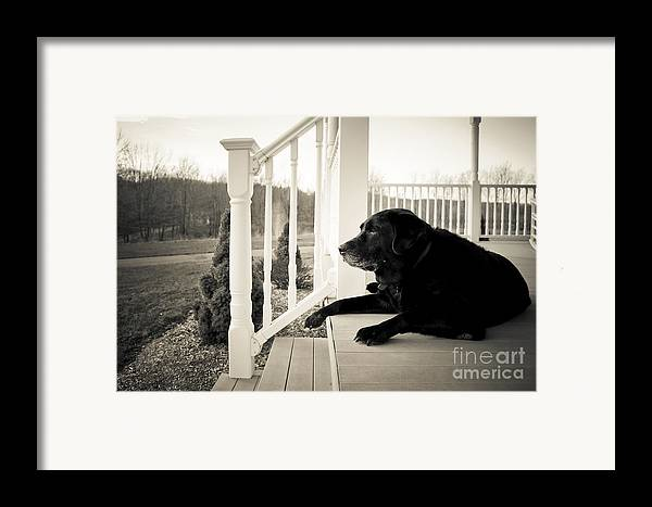 Dog Framed Print featuring the photograph Old Dog On A Front Porch by Diane Diederich