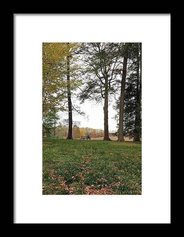 Trees Framed Print featuring the photograph Old Friends On A Bench II by Mary Haber