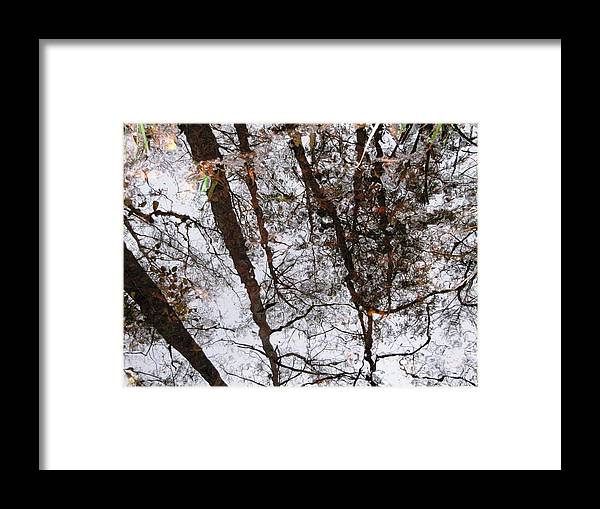 Old Growth Cypress Photograph Framed Print featuring the photograph Old Growth Cypress Reflection by Janet Wagner