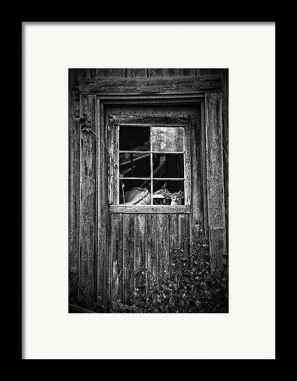 White Framed Print featuring the photograph Old Window by Garry Gay