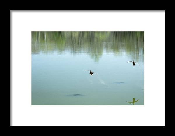 2014 Framed Print featuring the photograph On Approach by Terry Thomas