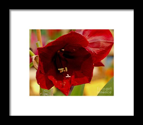 Flower Framed Print featuring the digital art On Fire by Pravine Chester