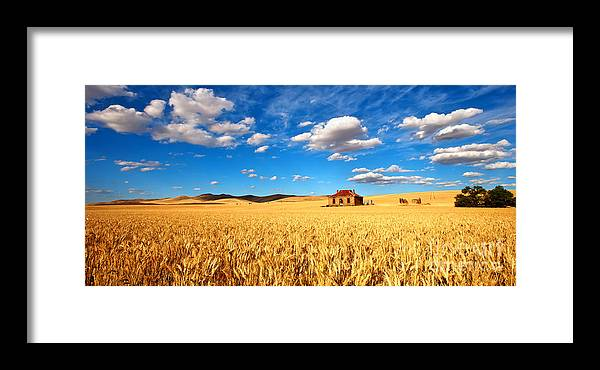 Golden Field Wheat Harvest Crop Abandoned Homestead Farm House Burra Mid North South Australia Blue Sky Fluffy White Clouds Framed Print featuring the photograph On Golden Fields by Bill Robinson