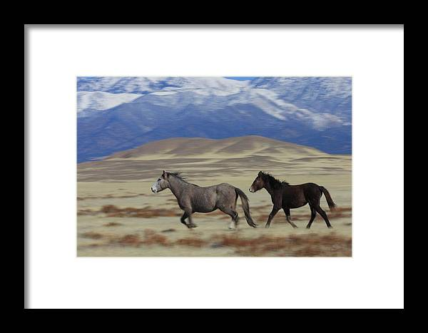 Wild Framed Print featuring the photograph On The Move by Gene Praag