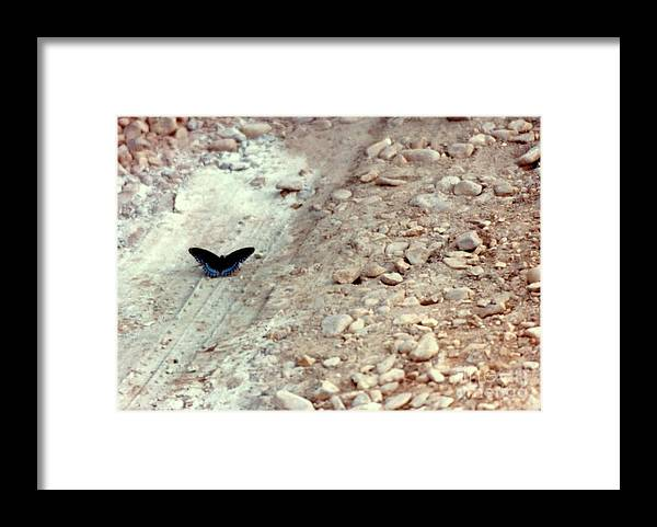 Insect Photography Framed Print featuring the photograph On The Road Again by Michael Hoard