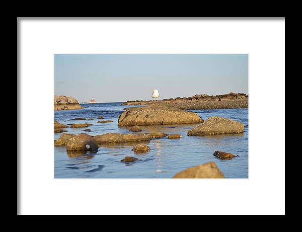 Gull Framed Print featuring the photograph On the rock by Jessica Cruz