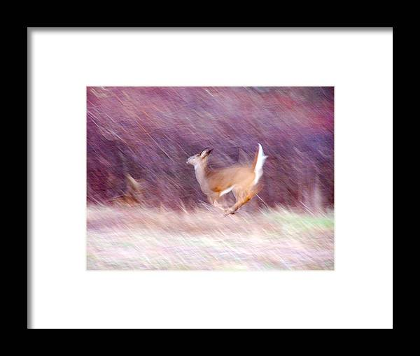 Deer Framed Print featuring the photograph On The Run by Tracy Winter