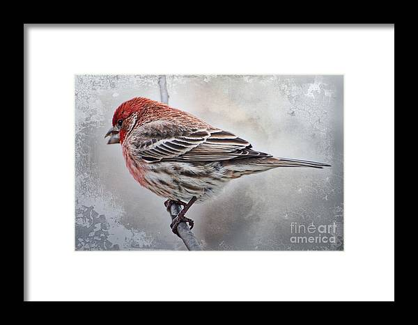 Nature Framed Print featuring the photograph Once Upon A Winters Day by Debbie Portwood