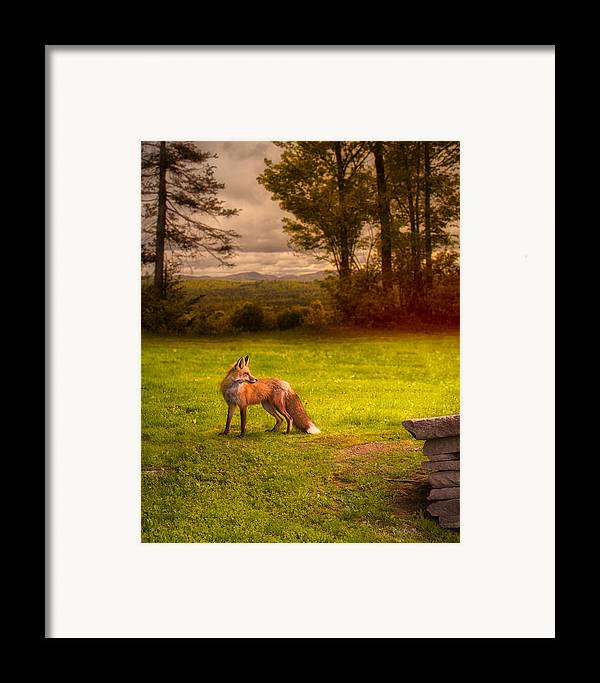 Fox Framed Print featuring the photograph One Red Fox by Bob Orsillo