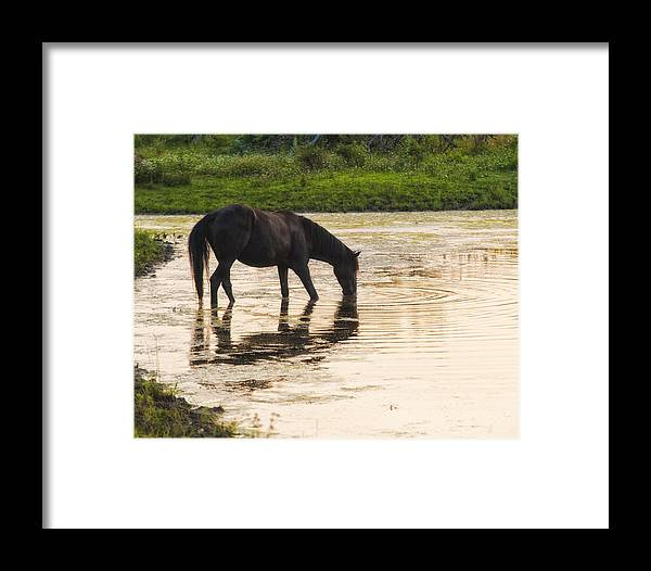 Equine Framed Print featuring the photograph One Summer Morning by Ron McGinnis