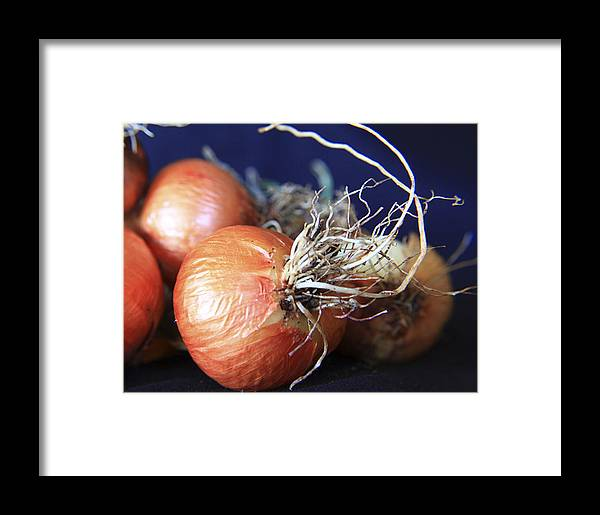 Fun Framed Print featuring the photograph Onion Roots by David Kehrli