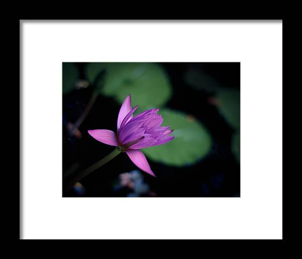 About Framed Print featuring the photograph Opening Water Lily by Mr Doomits