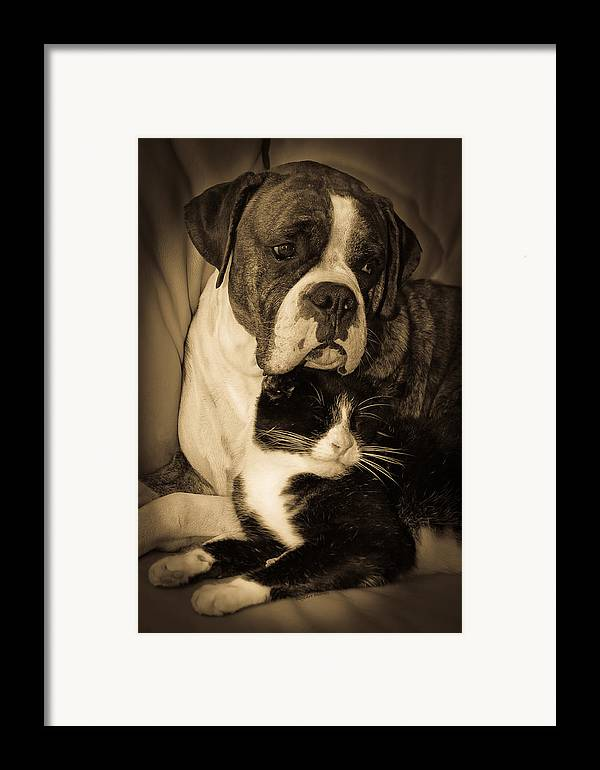 Boxer Framed Print featuring the photograph Opposites Attract by DigiArt Diaries by Vicky B Fuller