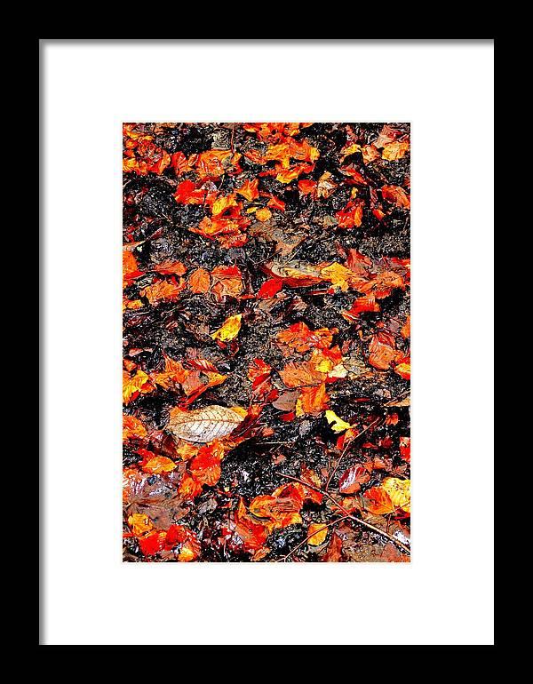 Nik Watt Framed Print featuring the photograph Orange And Brown by Nik Watt