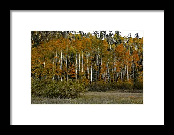 Landscape Framed Print featuring the photograph Orange Blossom Special by Bill Sherrell