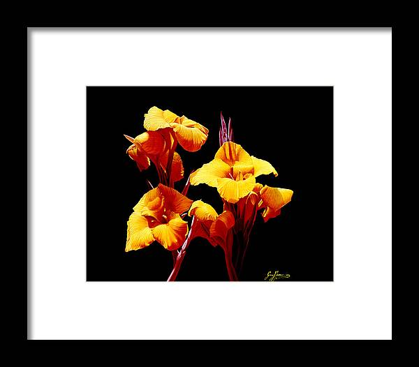 Yellow Cannas Framed Print featuring the painting Orange Cannas by Gary Hernandez
