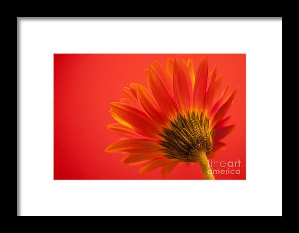Flower Framed Print featuring the photograph Orange Delight by Bianca Nadeau