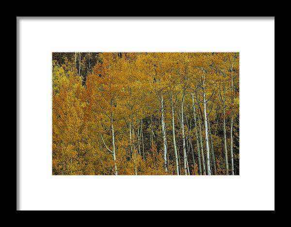 Landscape Framed Print featuring the photograph Orange Delight by Bill Sherrell