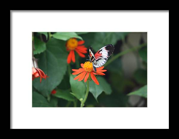 Butterfly Framed Print featuring the photograph Orange On Orange by Chuck Hicks