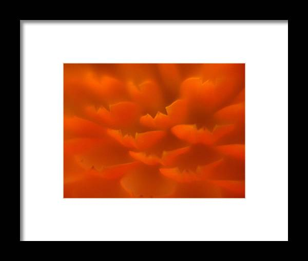 Flowers Framed Print featuring the photograph Orange Petals by Jeri lyn Chevalier