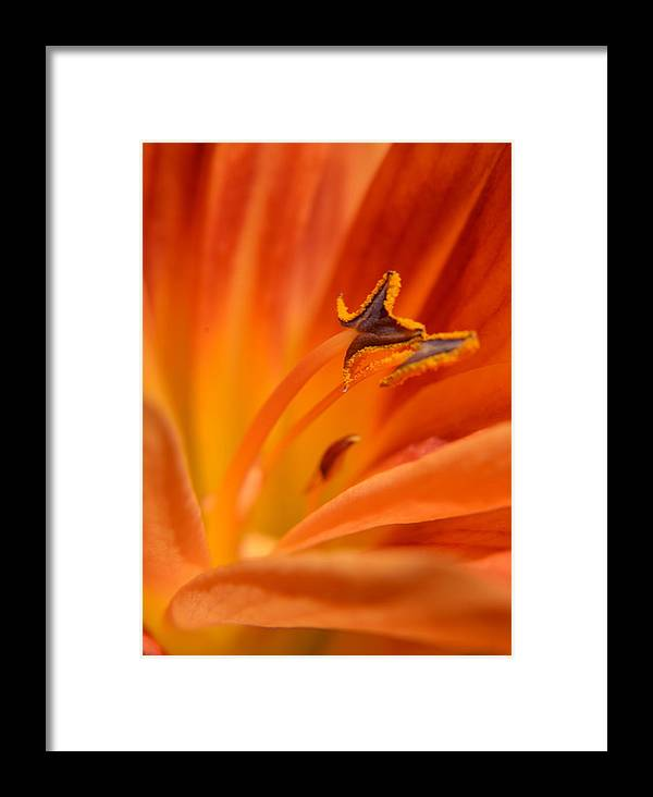 Flower Framed Print featuring the photograph Orange Pollen by Jeri lyn Chevalier