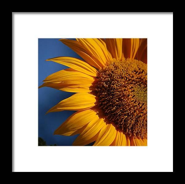 Orange Framed Print featuring the photograph Orange Sunflower by Nicole Berna