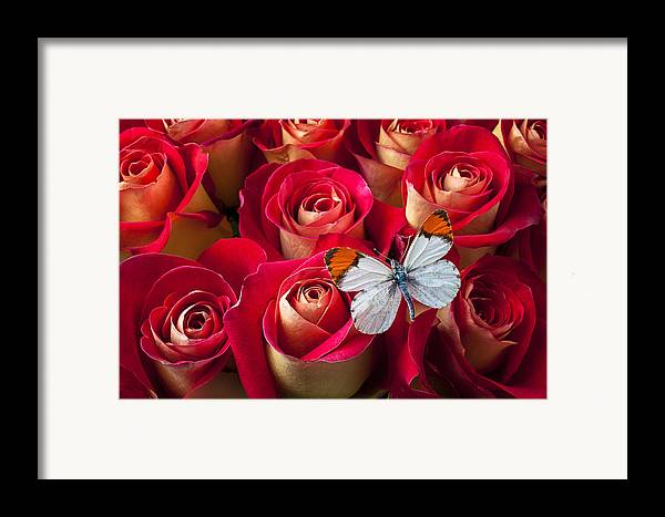 Flowers Framed Print featuring the photograph Orange Tip Butterfly by Garry Gay