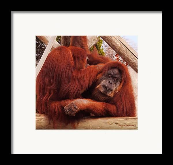 Orangutans Framed Print featuring the photograph Orangutans Grooming by DiDi Higginbotham