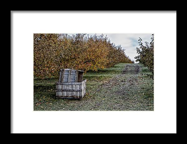 Green Mountain Orchards Putney Vermont Framed Print featuring the photograph Orchard Apple Boxes by Tom Singleton
