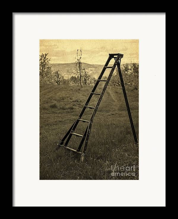 Ladder Framed Print featuring the photograph Orchard Ladder by Edward Fielding