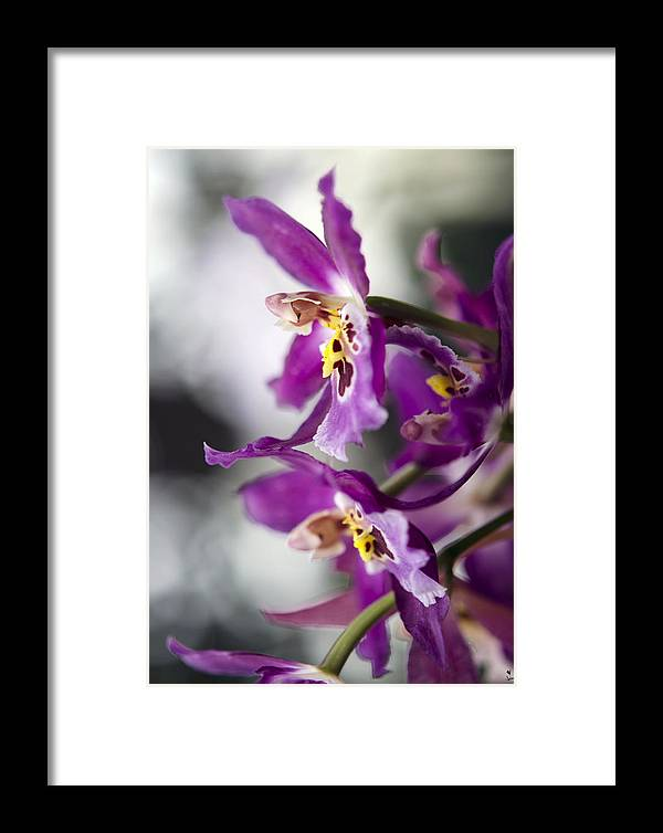 Orchid Framed Print featuring the photograph Orchid Blossom by Minartesia