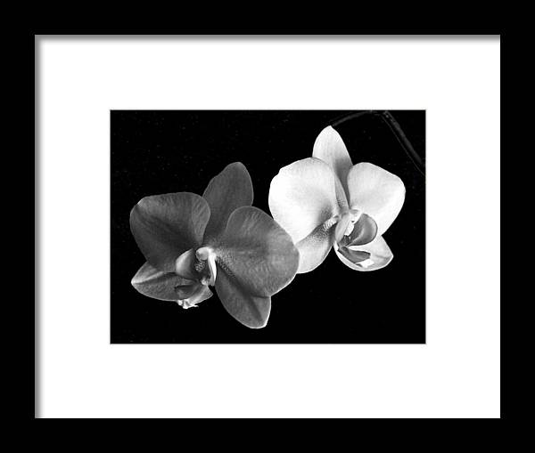 Floral Framed Print featuring the photograph Orchid in black and white by Steve Karol