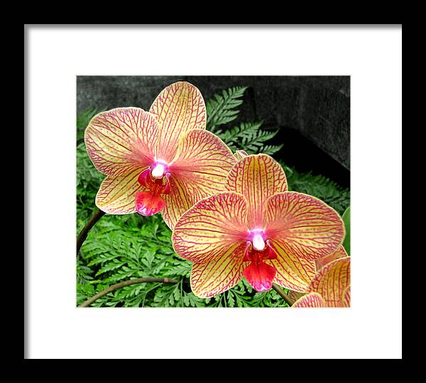 Duane Mccullough Framed Print featuring the photograph Orchid Pair by Duane McCullough