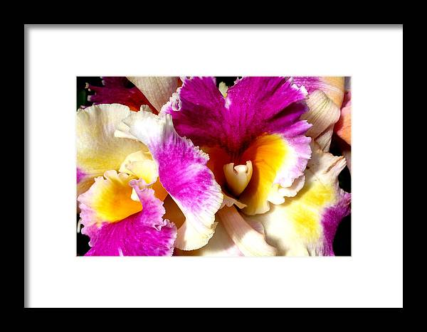 Orchid Framed Print featuring the photograph Orchid Series 6 by Katy Hawk