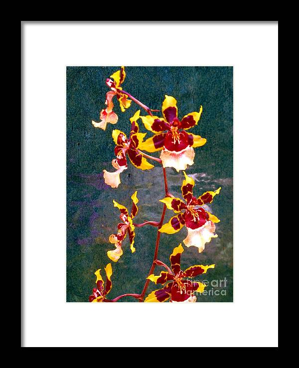 Orchid Framed Print featuring the photograph Orchid Spray By Pottery by Barbie Corbett-Newmin