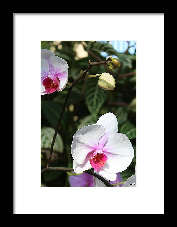 Orchid Framed Print featuring the photograph Orchid Three by Mark Steven Burhart