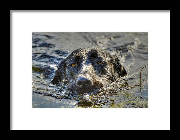 Dog Framed Print featuring the photograph Otis by Sheila Faryna